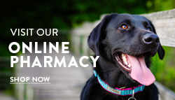 Visit the Bedford Greenwich Animal Hospital Online Pharmacy